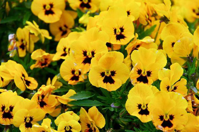 花々もしかめっ面