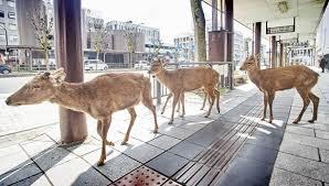 奈良に行こう