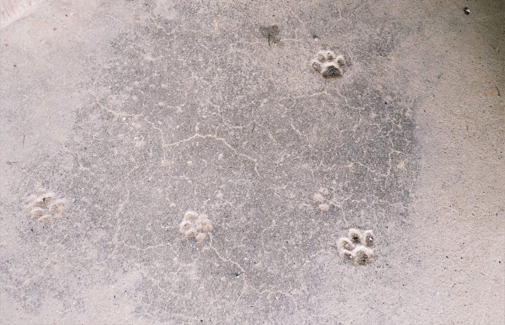 野良の足跡