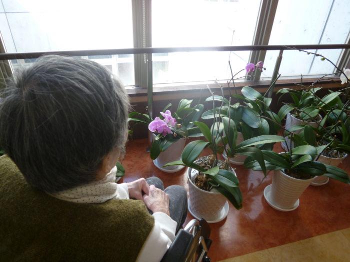 胡蝶蘭 春の訪れ 特別養護老人ホームアーバンケア御厨