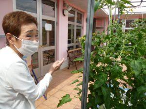 アーバンケア御厨 屋上 水耕栽培 キュウリ トマト 散歩 コロナ対策