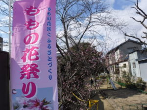 桃の花祭り